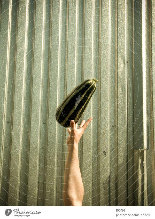 fast frei Zucchini Gemüse Gurke Kürbis leicht Hand werfen Schweben fliegen hochwerfen fangen grün Vegetarische Ernährung Frucht Luftverkehr Zentrifuge fallobst