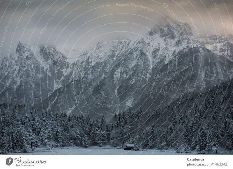 Dezembernachmittag Natur grün schön weiß Landschaft Winter Wald schwarz kalt Berge u. Gebirge Schnee grau Freiheit Zufriedenheit wandern Ausflug