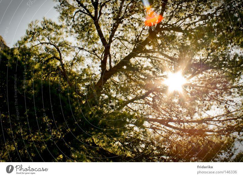 wenn die sonne strahlt Leben Erholung Sommer Sonne Natur Stern Wetter Wärme Baum Blatt heiß hell Gefühle Energie Geäst Zweige u. Äste grell Stern (Symbol)
