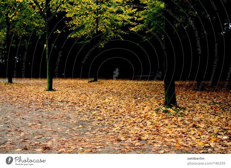 Herbstdepression Wald Park Tiergarten Blatt Herbstlaub mehrfarbig Blattgrün Wege & Pfade Fußweg Spaziergang Rascheln Dämmerung Baum Allee dunkel Trauer