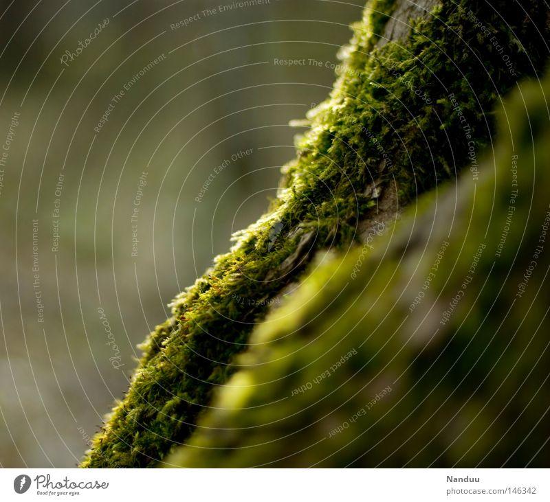Wellen Natur grün schön Pflanze ruhig Wachstum authentisch Vergänglichkeit weich fantastisch Frieden zart schäbig Moos Märchen mystisch