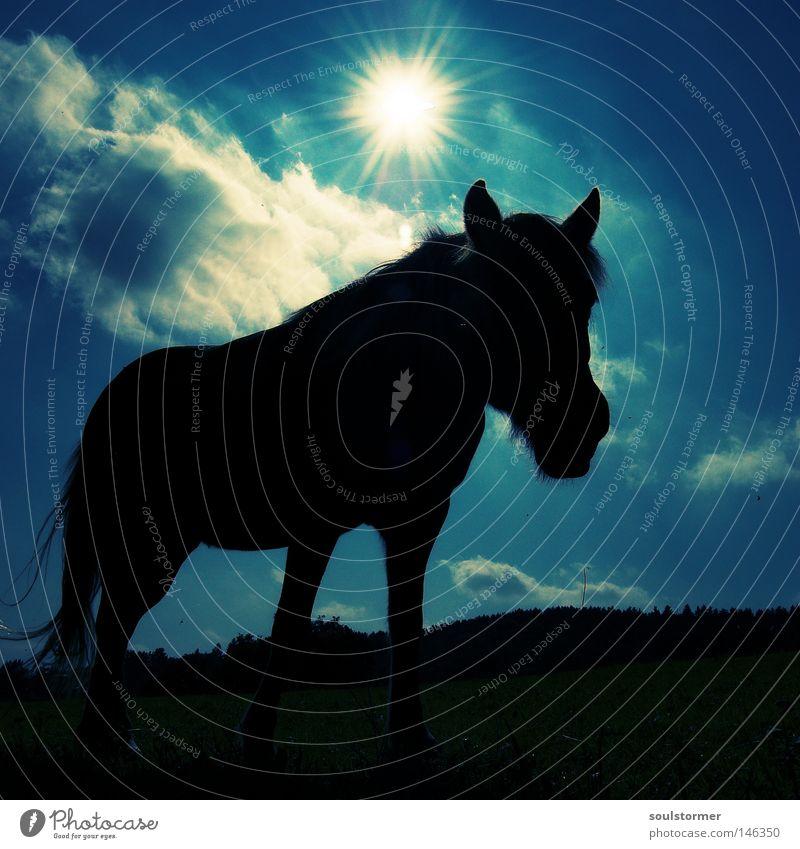 kurz vor Schlafenszeit... Cross Processing Grünstich Gelbstich Pferd Gegenlicht Sonnenuntergang Stern Himmel Tier Säugetier schwarz Silhouette Bildausschnitt