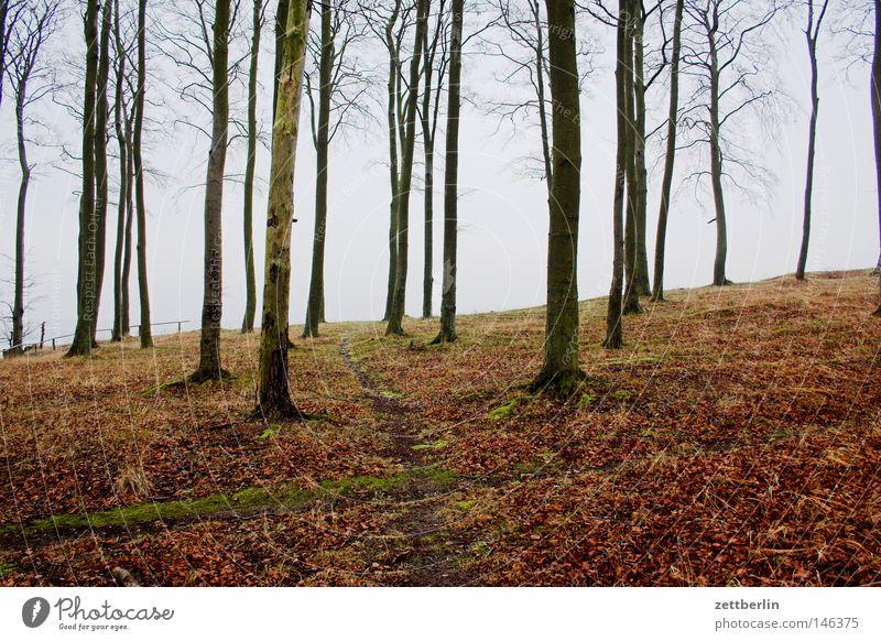 Buchen suchen Suche Wald Baumstamm Holz Forstwirtschaft Holzwirtschaft wandern Fußweg Klippe Ostsee Herbst Winter Nebensaison Wege & Pfade Zaun Absturzgefahr