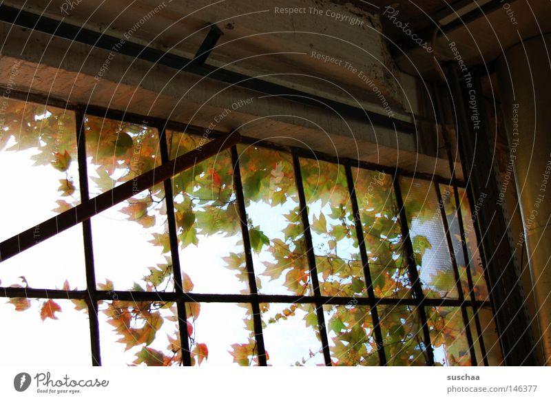 fenster I ruhig Blatt Einsamkeit Herbst Fenster Glas trist Aussicht verfallen Fensterscheibe abgelegen Glasscheibe baufällig