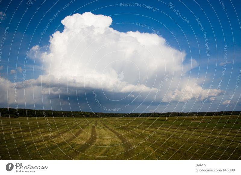 Wolken.Feld. Himmel weiß grün blau Wolken Herbst Wiese Kraft Feld Wetter Erde Energiewirtschaft Macht bedrohlich Spuren Ernte
