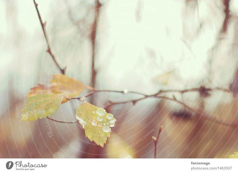 matinée hivernale IV Natur Zweige u. Äste Blatt gelb braun Winter Wald feucht nass Wassertropfen Unschärfe kalt frisch Herbst herbstlich verzweigt grün Waldrand