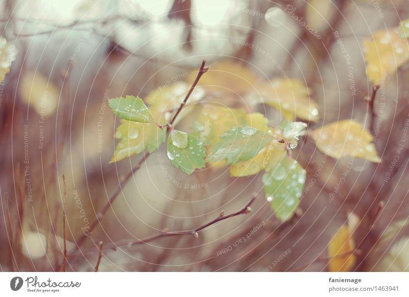matinée hivernale III Natur Tropfen feucht Winter Pflanze Zweig Blatt Wasser Herbst kalt trist Unschärfe Mitte Wald Waldrand Zweige u. Äste gelb grün hellgrün