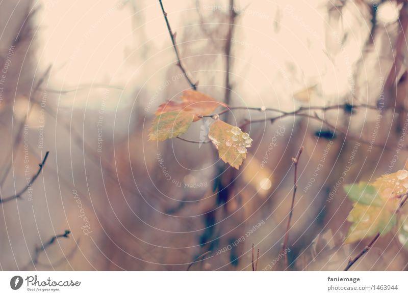 matinée hivernale I Natur Pflanze Wasser Wassertropfen Herbst Winter Baum Blatt schön feucht Nebel Rauch Tropfen braun hellbraun Ast Zweige u. Äste orange gelb