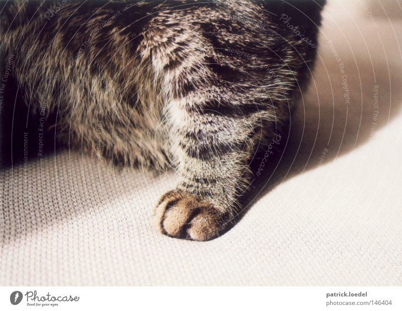 Tatze Sonne Tier Erholung Haare & Frisuren grau Katze sitzen Sofa Fell Pfote Haustier Krallen Hauskatze Polster lümmeln