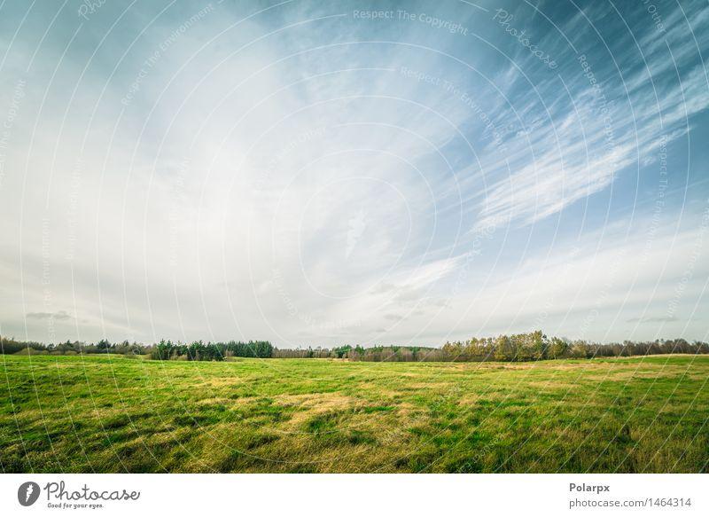 Drastischer Himmel über einem Landschaftsfeld Natur Pflanze blau grün schön Farbe Sommer Sonne Baum Wolken Wald Umwelt Herbst Wiese