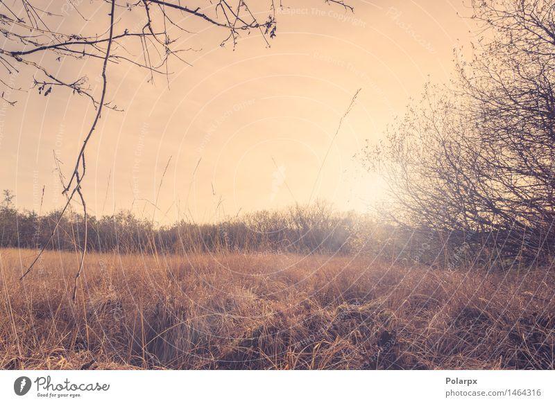 Morgen Sonnenaufgang in einer Landschaft Himmel Natur Pflanze grün schön Farbe Sommer Baum Meer Wolken Wald Umwelt Herbst Wiese