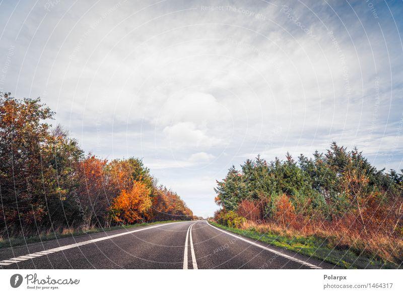 Autobahn umgeben von bunten Bäumen im Herbst Himmel Natur Ferien & Urlaub & Reisen blau grün schön Baum rot Landschaft Blatt Wolken Wald gelb Straße Wiese