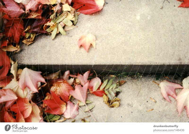 herbst II Herbst Blatt Treppe Beton Boden Jahreszeiten Sturm Wind fallen rot gelb grün Hintergrundbild kalt Physik Natur Wärme Außenaufnahme