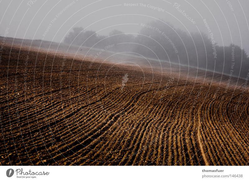Herbstacker ruhig Lampe Traurigkeit Denken Feld Nebel Beginn trist Romantik Frieden Ende Vergänglichkeit Zeichen Landwirtschaft