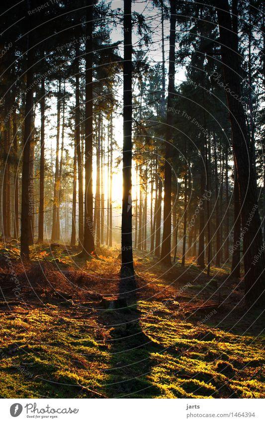 guten abend Natur Landschaft Pflanze Sonnenaufgang Sonnenuntergang Schönes Wetter Baum Wald authentisch natürlich schön Wärme Geborgenheit Gelassenheit geduldig