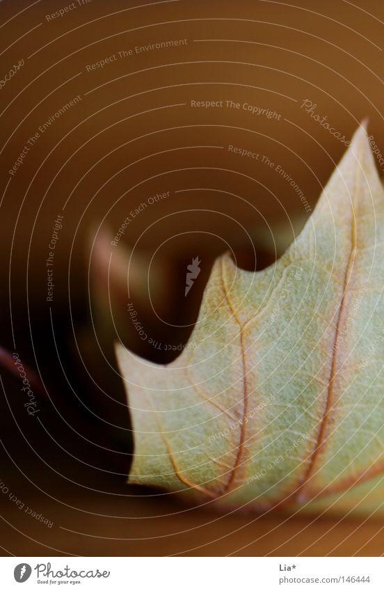 stiller Herbst alt Blatt ruhig elegant Ordnung Wandel & Veränderung Frieden Vergänglichkeit Spitze Jahreszeiten Stillleben edel Tiefenschärfe sanft harmonisch