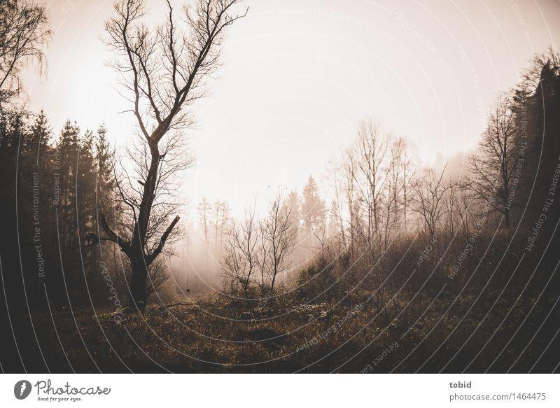 Verwunschen Natur Landschaft Pflanze Himmel Herbst Winter schlechtes Wetter Nebel Baum Wiese Feld Wald Hügel bedrohlich dunkel kalt Einsamkeit Endzeitstimmung