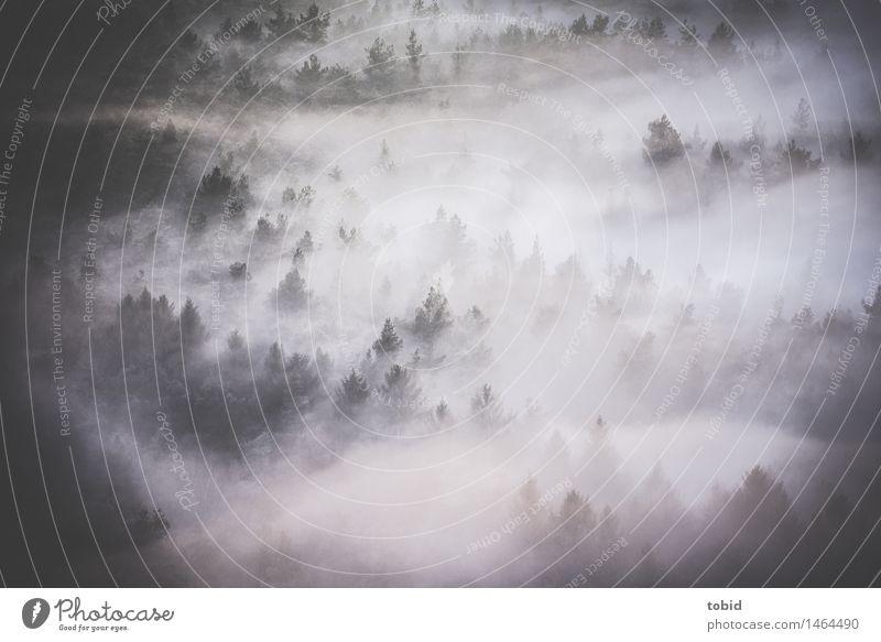 Nebel Natur Landschaft Pflanze Urelemente Wolken Baum Tanne Nadelwald Wald Hügel Berge u. Gebirge dunkel frei einzigartig Idylle Nebelschleier Nebelwald