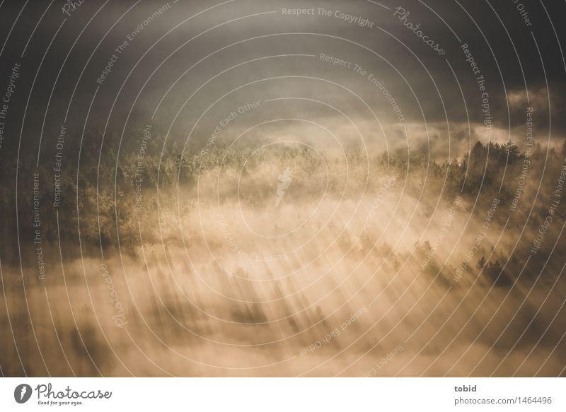 Sonnenschein Natur Landschaft Schönes Wetter Nebel Baum Wald Hügel hell Wärme einzigartig Idylle Ferne Farbfoto Außenaufnahme Menschenleer Tag Dämmerung Licht