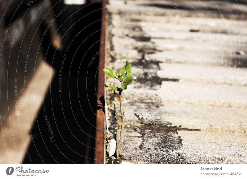 Last Halm Standing grün Pflanze Einsamkeit Gras grau Kraft Beton Vergänglichkeit Gleise stark Verkehrswege Pflastersteine Hof Überleben