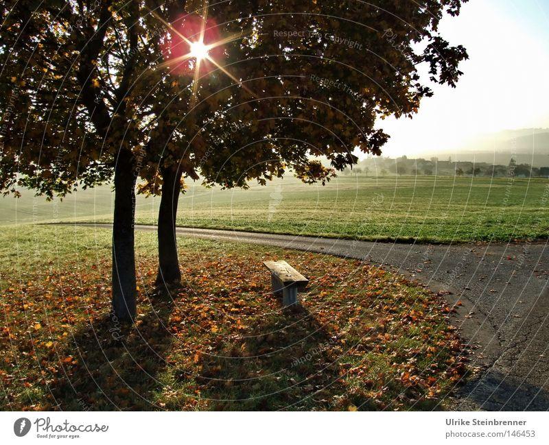 Sternförmige Sonne scheint durch Baumpaar im Herbst Ausflug 2 Mensch Landschaft Nebel Blatt Wiese Feld Wege & Pfade fallen grün Baumfarn Herbstlaub Boden