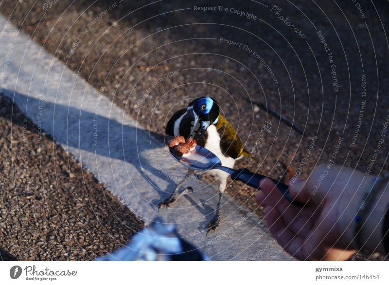 brave Natur Ernährung Straße Vogel Reisefotografie Frieden Vertrauen Lebewesen Appetit & Hunger Süßwaren sanft Australien füttern Entscheidung