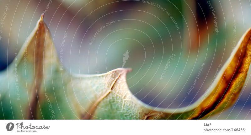 wilder Herbst Farbe Blatt ruhig Wandel & Veränderung Spitze Vergänglichkeit Jahreszeiten Tiefenschärfe herbstlich Oktober mögen Zacken Brennpunkt Physik