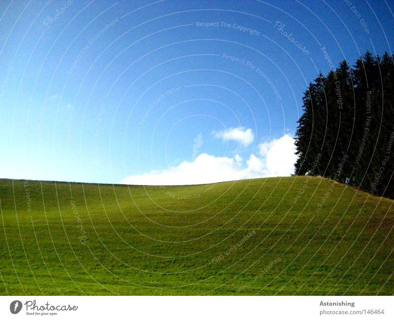 unspektakuläre Naturaufnahme Himmel Baum grün blau Wolken dunkel Wiese Gras Landschaft hell Hügel aufwärts Österreich Blauer Himmel Richtung