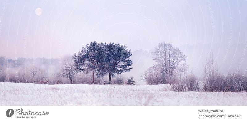 Kalter Wintermorgen mit einem Mond Himmel Natur Pflanze Wasser Baum Landschaft Wiese Schnee Holz Wetter Luft Eis Nebel elegant Sträucher