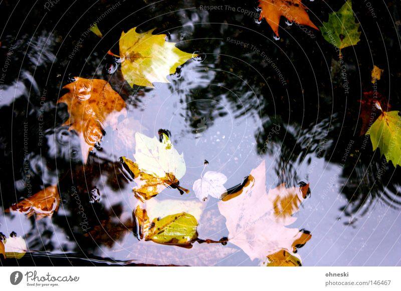 Ins Wasser gefallen mehrfarbig Reflexion & Spiegelung Wassertropfen Herbst Regen Blatt Straße Tropfen braun gelb grün Vergänglichkeit Pfütze Kreis
