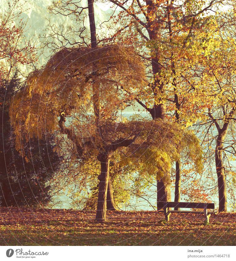 Rückzugsort Umwelt Natur Landschaft Sonne Sonnenlicht Herbst Schönes Wetter Baum Garten Park Wiese gelb gold Zufriedenheit Idylle ruhig stagnierend