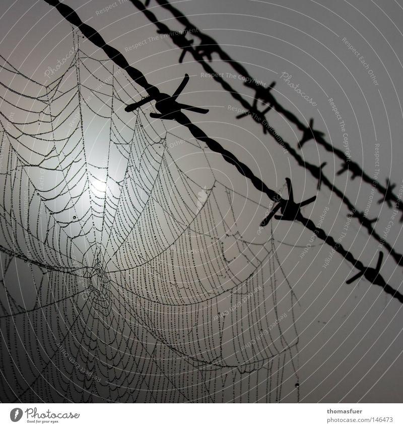 Leben am Draht dunkel grau Traurigkeit Angst Nebel Wassertropfen Trauer Netz Verzweiflung eng Tau gefangen Panik Draht Schwäche Überwachung