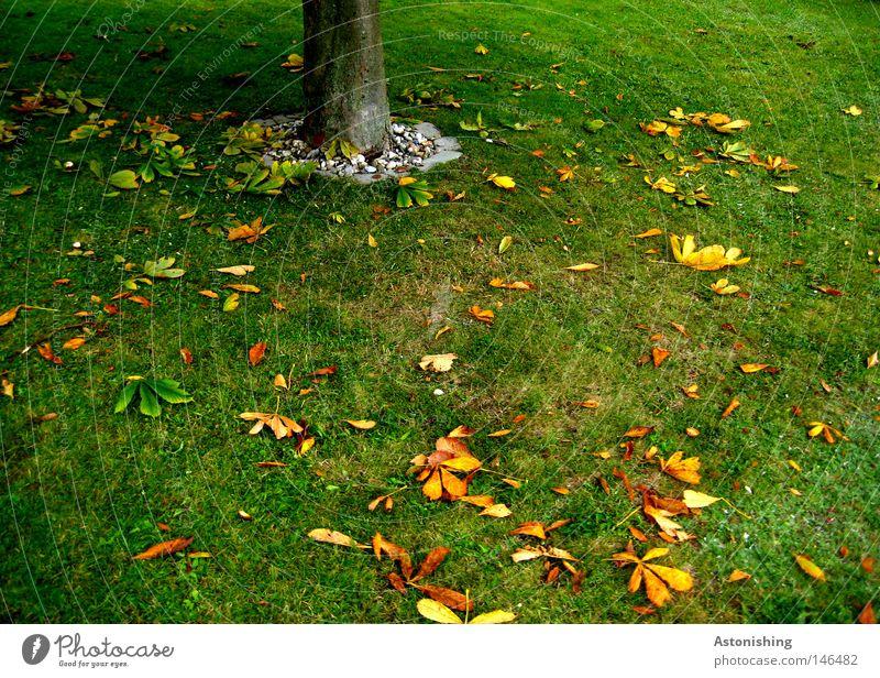 das Blatt fällt nicht weit vom Stamm Natur Baum grün gelb Wiese Herbst Gras Erde Boden Baumstamm Herbstlaub gefallen Herbstfärbung Kastanienblatt