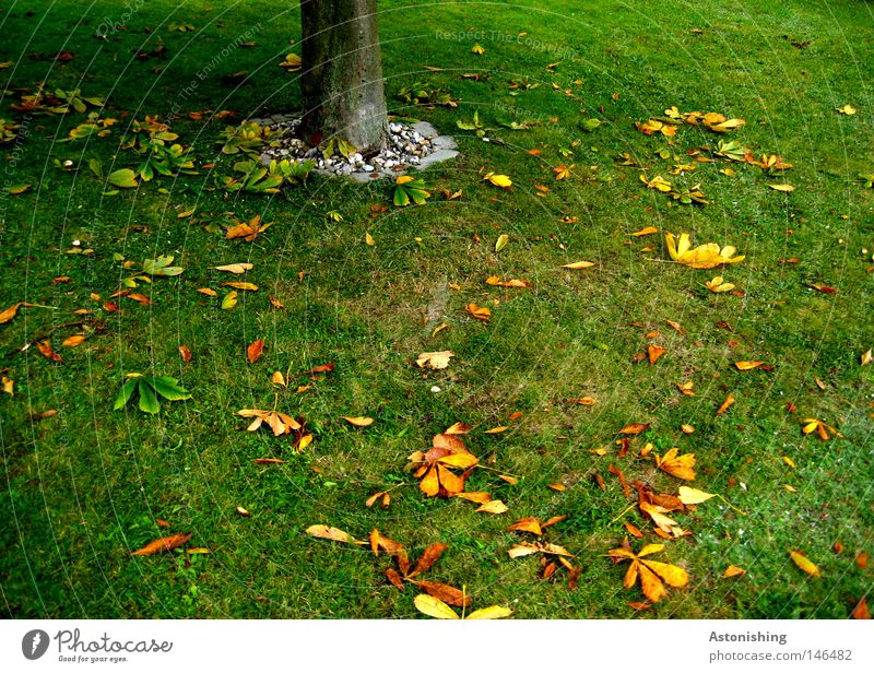 das Blatt fällt nicht weit vom Stamm Natur Erde Herbst Baum Gras Wiese gelb grün Baumstamm Boden Farbfoto gefallen Herbstlaub Herbstfärbung Kastanienblatt