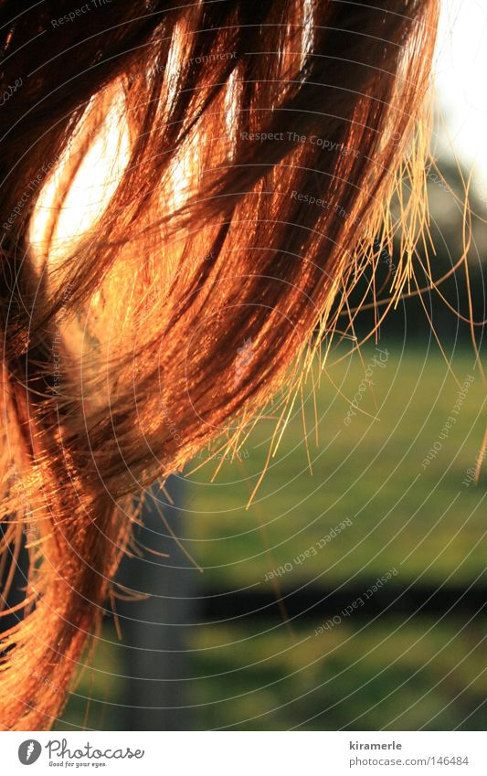 wie die Abendsonne und die Haare im Wind rot Haare & Frisuren Sonne Feld grün Wiese Locken Wellen lang Zaun Gefühle frei Freiheit Glück Herbst Abenddämmerung