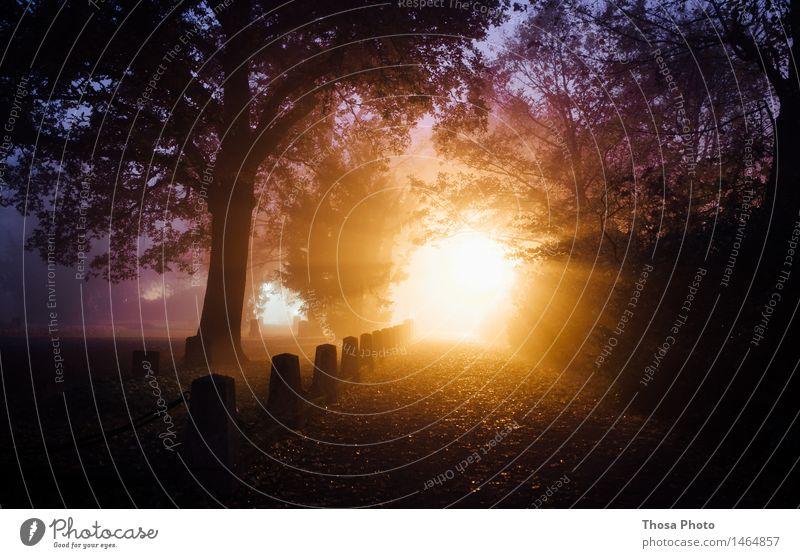 Light Natur Landschaft dunkel Lampe hell Park Luft leuchten Feuer Friedhof