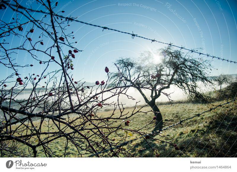 Frühblüher Umwelt Natur Landschaft Pflanze Wolkenloser Himmel Sonne Sonnenlicht Herbst Schönes Wetter Nebel Baum Hagebutten Beeren Obstbaum Wiese