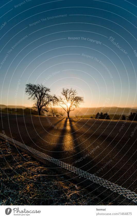 Der andere Weihnachtsbaum Umwelt Natur Landschaft Pflanze Wolkenloser Himmel Sonne Sonnenaufgang Sonnenuntergang Sonnenlicht Winter Schönes Wetter Baum Gras