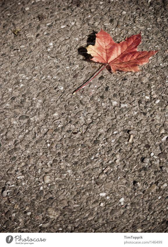 The Autumn Leaves (Street Version) Baum Blatt Einsamkeit Straße Herbst Wege & Pfade Asphalt Vergänglichkeit Jahreszeiten Teer färben