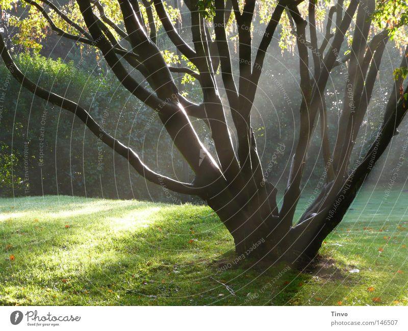 Wie der Tag, an dem du gegangen bist... Baum grün ruhig Blatt schwarz Einsamkeit dunkel Herbst Wiese Traurigkeit Park hell Nebel Hoffnung Trauer Rasen
