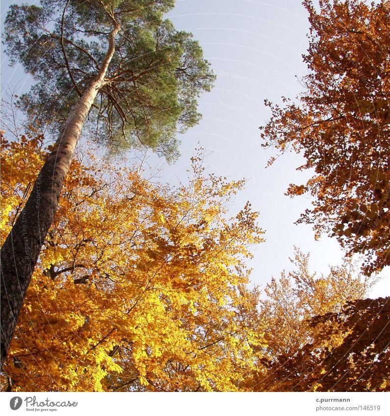 Herbststimmung Natur Baum ruhig Blatt Wald Herbst Wärme Deutschland gold Europa Romantik Vergänglichkeit Zoo Hessen