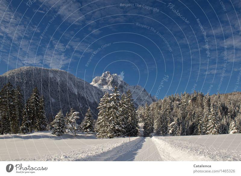 Weg zur Wettersteinspitze wandern Skilanglauf Umwelt Natur Landschaft Pflanze Urelemente Wasser Himmel Winter Schönes Wetter Tannen und Fichtenwald Alpen