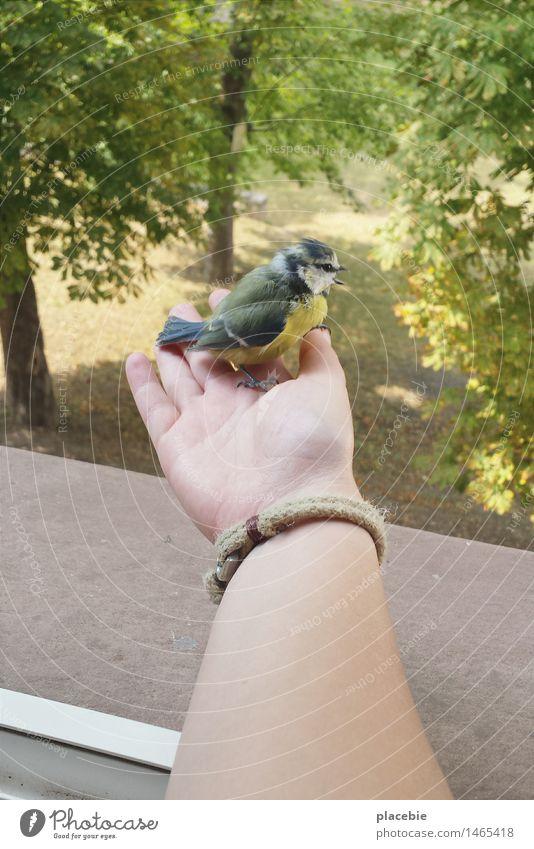 Kam ein Vogel geflogen... Natur Tier Liebe Spielen Glück fliegen Zusammensein Freundschaft Park träumen Flügel genießen beobachten niedlich berühren