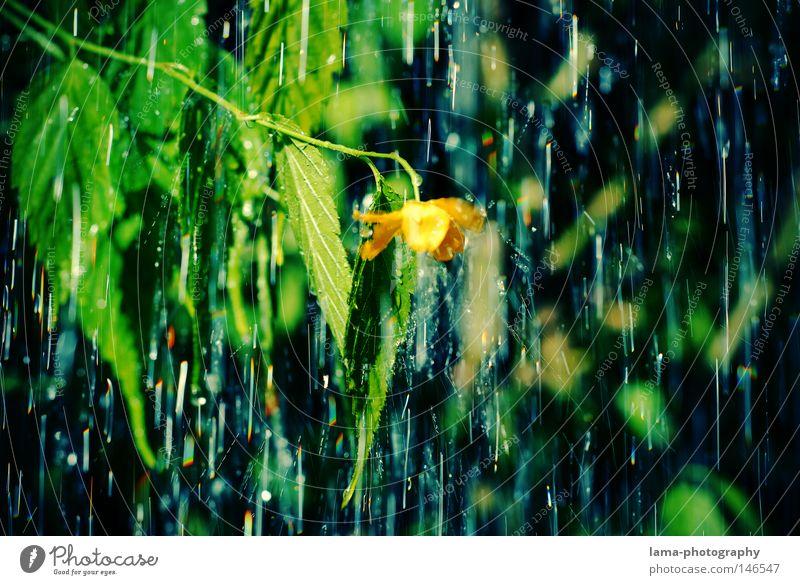 rain Natur Baum Blume grün Pflanze Blatt kalt Herbst Blüte Park Regen Wetter Wassertropfen nass Tropfen Gewitter