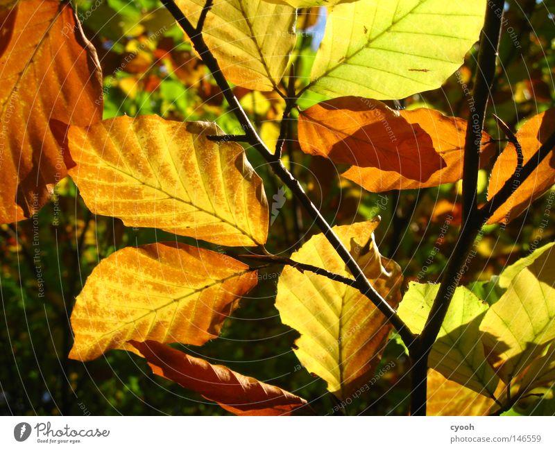 .. und noch ein paar Blätter Natur grün Baum rot Blatt ruhig gelb Wärme Herbst braun orange wandern Spaziergang Schönes Wetter Physik herbstlich