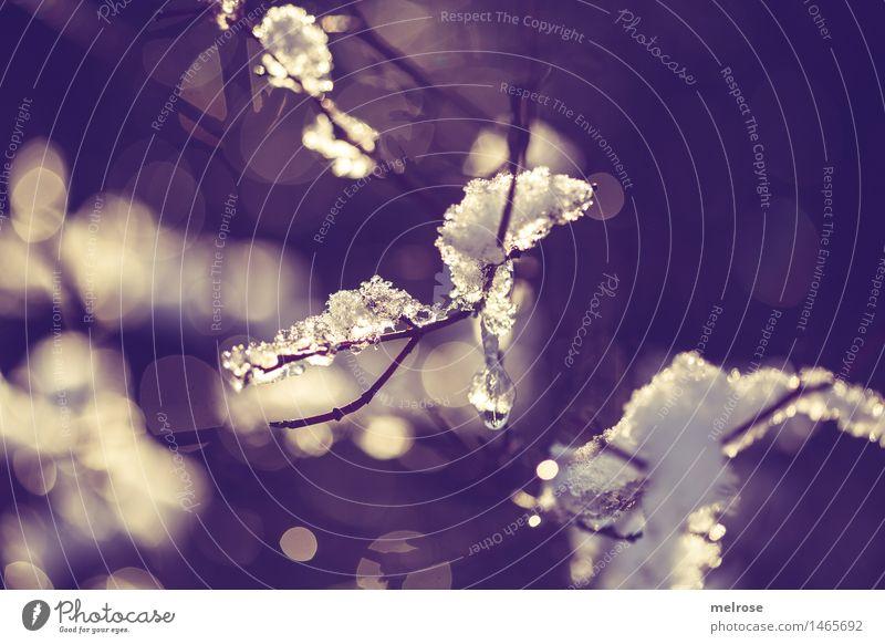 a bisserl Schnee Stil Natur Wasser Wassertropfen Sonnenlicht Winter Schönes Wetter Farn Zweige u. Äste Wald Unschärfe Lichteinfall Lichterscheinung Lichtpunkt