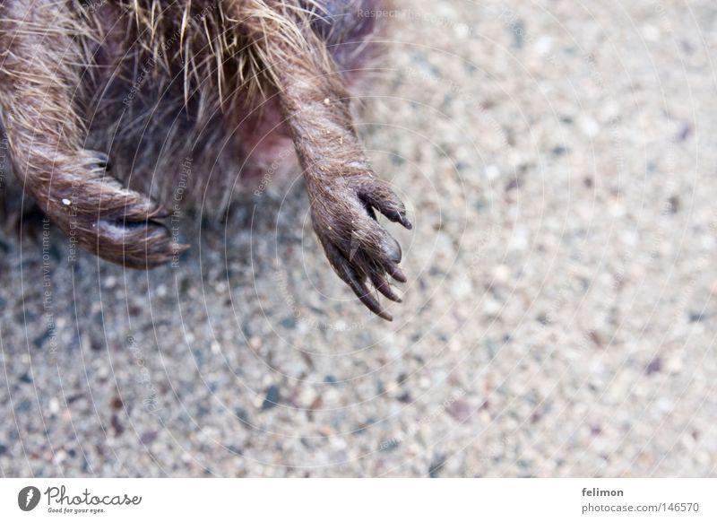 igelpranken Tier Beine Tierfuß Boden Bodenbelag Asphalt Fell Pfote Krallen Igel