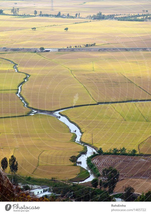 Flußfelder II Reis Ferien & Urlaub & Reisen Tourismus Abenteuer Ferne Freiheit Landwirtschaft Forstwirtschaft Umwelt Natur Landschaft Erde Wasser Feld Fluss