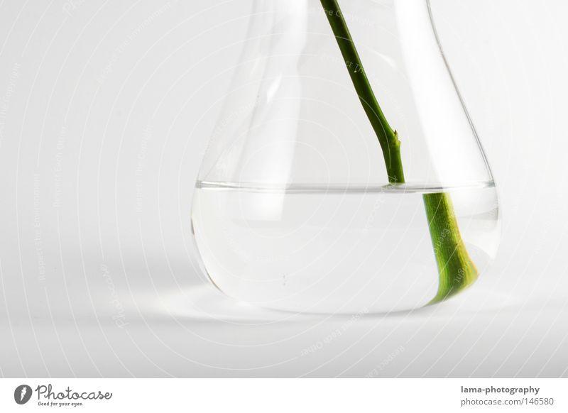 clean rein durchsichtig weiß Reagenzglas Vase Pflanze grün Grünpflanze Blume Blumenvase Reflexion & Spiegelung Lichtbrechung versetzt vergrößert