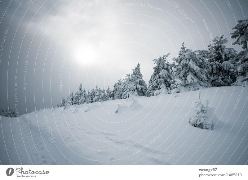 Weihnachtswunsch Natur Landschaft Himmel Wolken Horizont Sonne Winter schlechtes Wetter Schnee Baum Fichtenwald Wald Berge u. Gebirge dunkel grau schwarz weiß